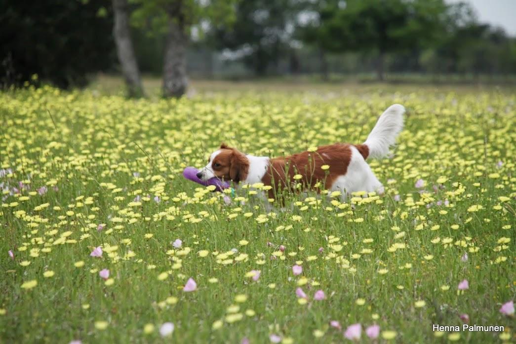 Kooiker in spring
