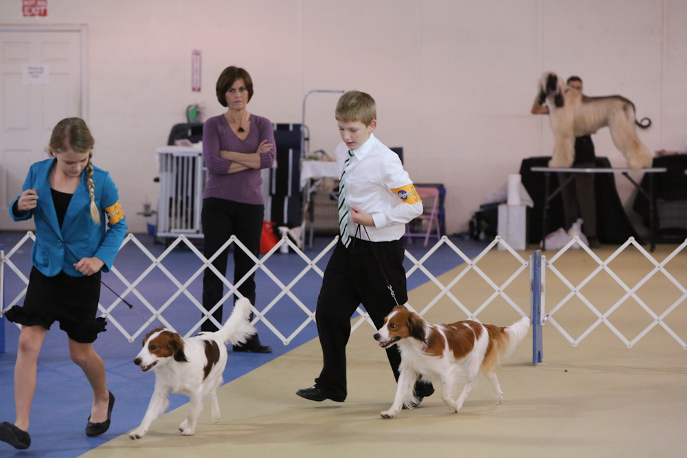 Kooikers with their Junior Handlers