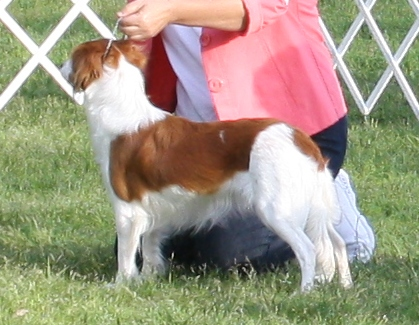 Kooiker dog show March 2012