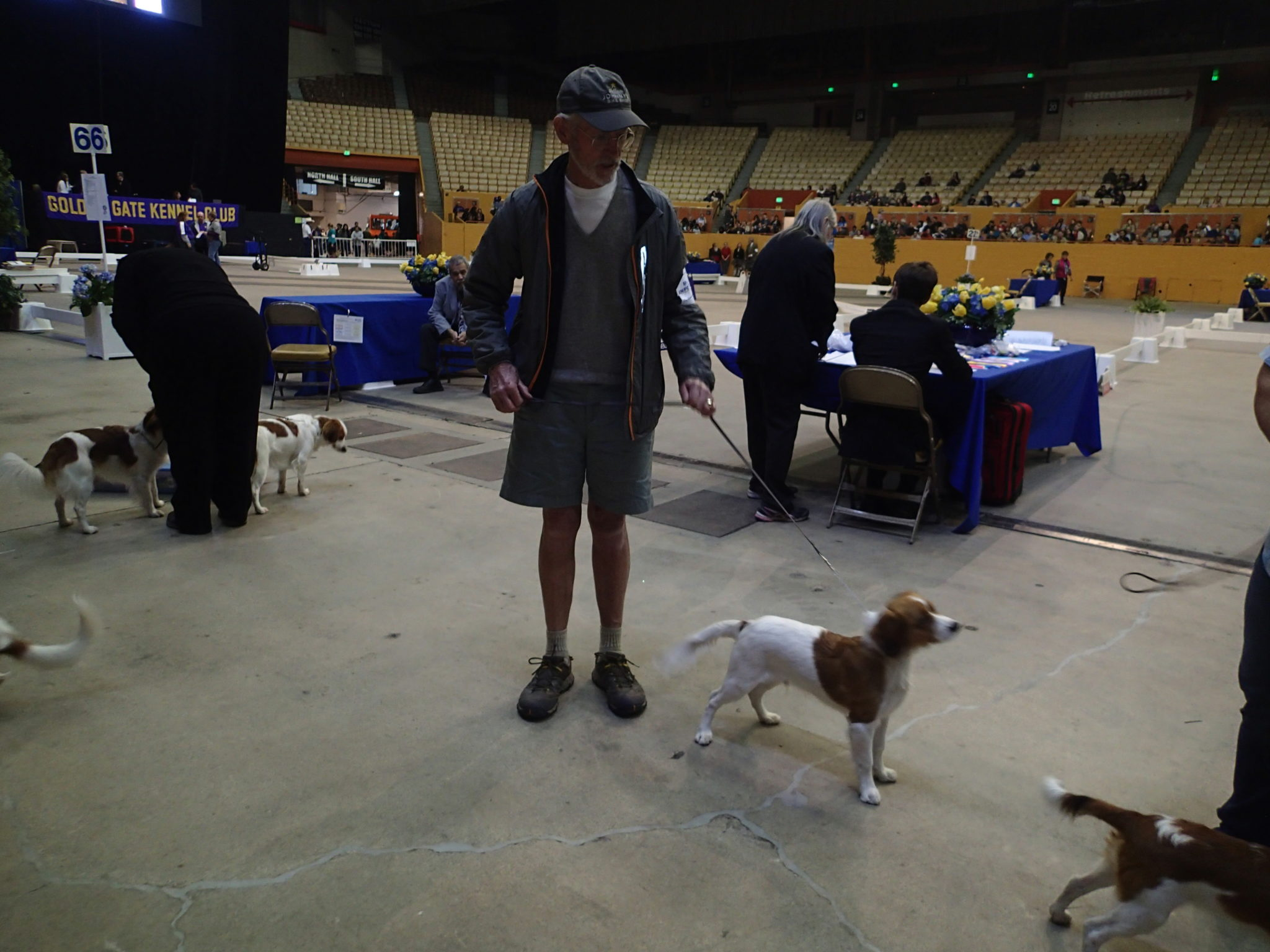 kooiker Zane at the dog show