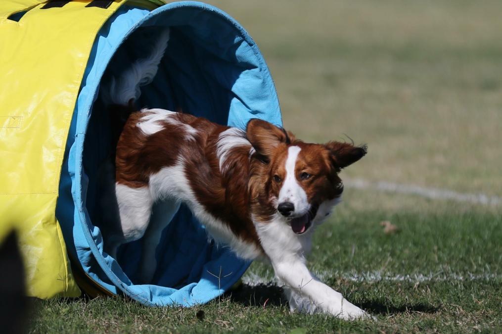 Harvey training for agility